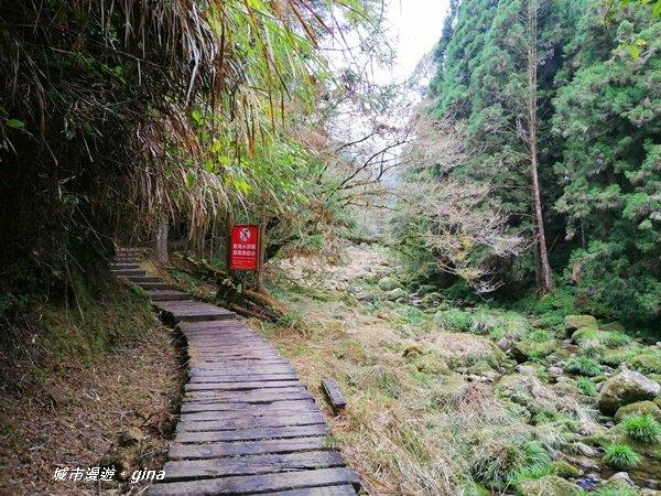 森林的自然美學。 杉林溪~天眼步道_1281203