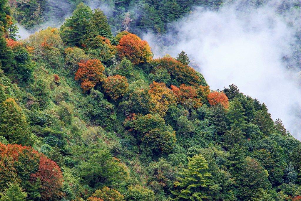 秋的饗宴/新中橫塔塔加絕版夫妻樹_486783