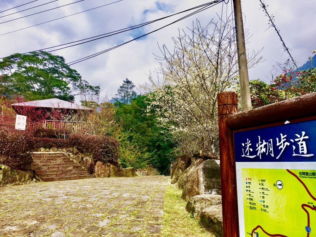 櫻花嬌竹林靜溪水潺潺 迷糊步道福山古道_266492