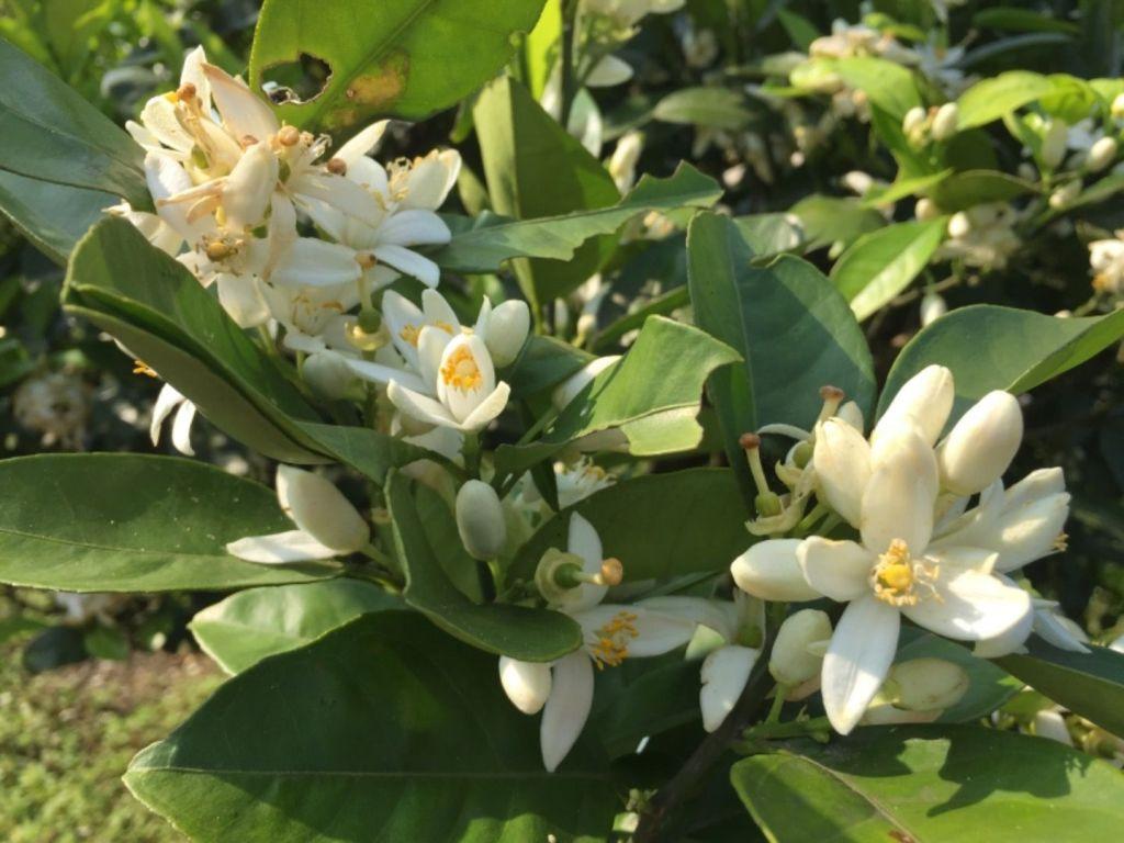 春在大屯連峰步道花兒朵朵開_296421