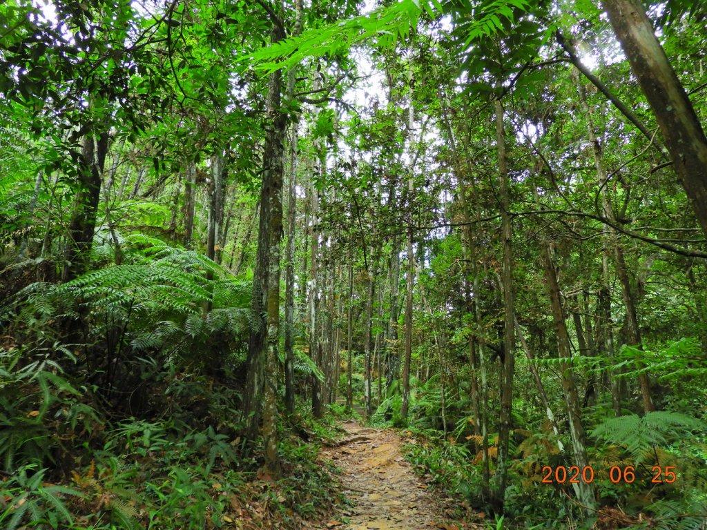 南投 魚池 澀水森林步道_1012416