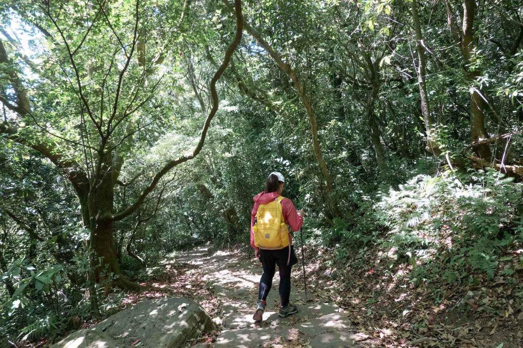 【台北大縱走第一段】輕鬆愜意的竹林與鄉村小徑_1362378
