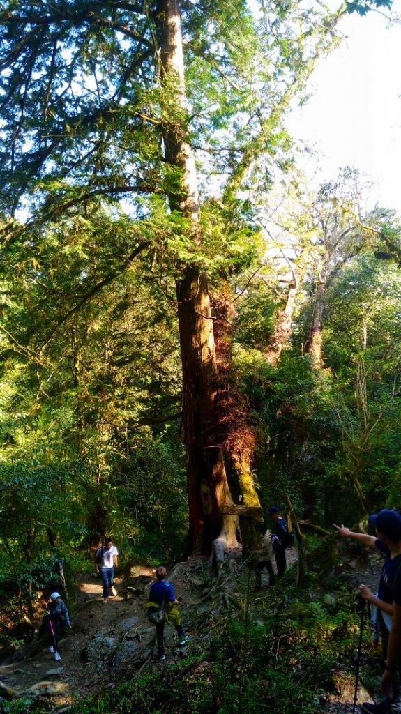 鎮西堡B區巨木群_1325614