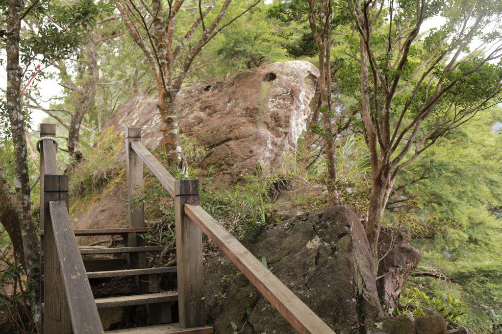 北得拉曼:巨木步道_173503