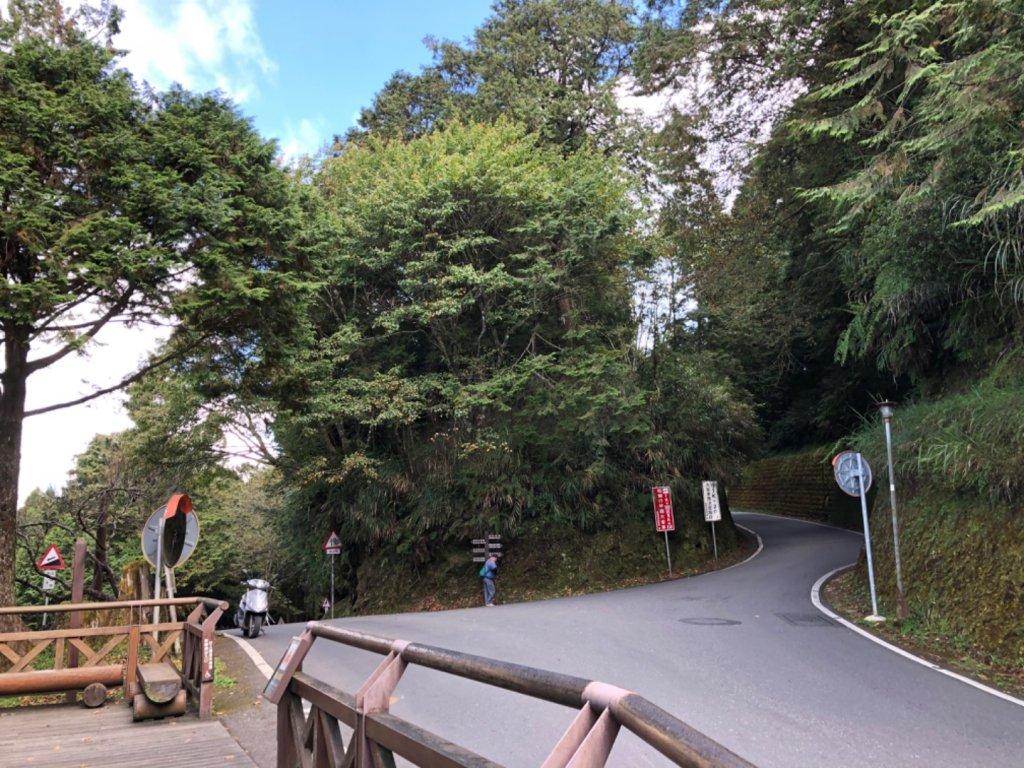 阿里山水山巨木、祝山觀日步道、對高岳步 _726962