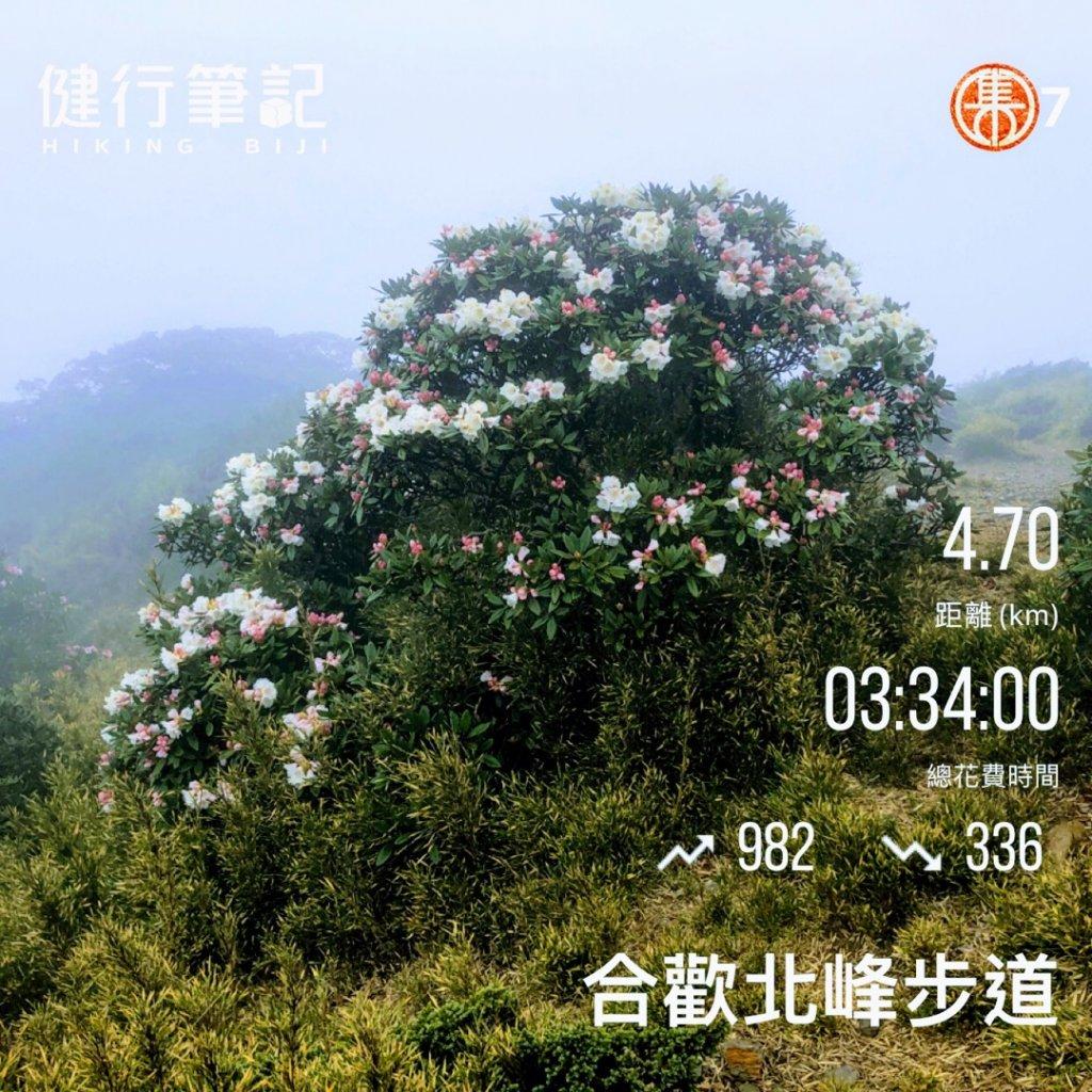 合歡北峰_1363159