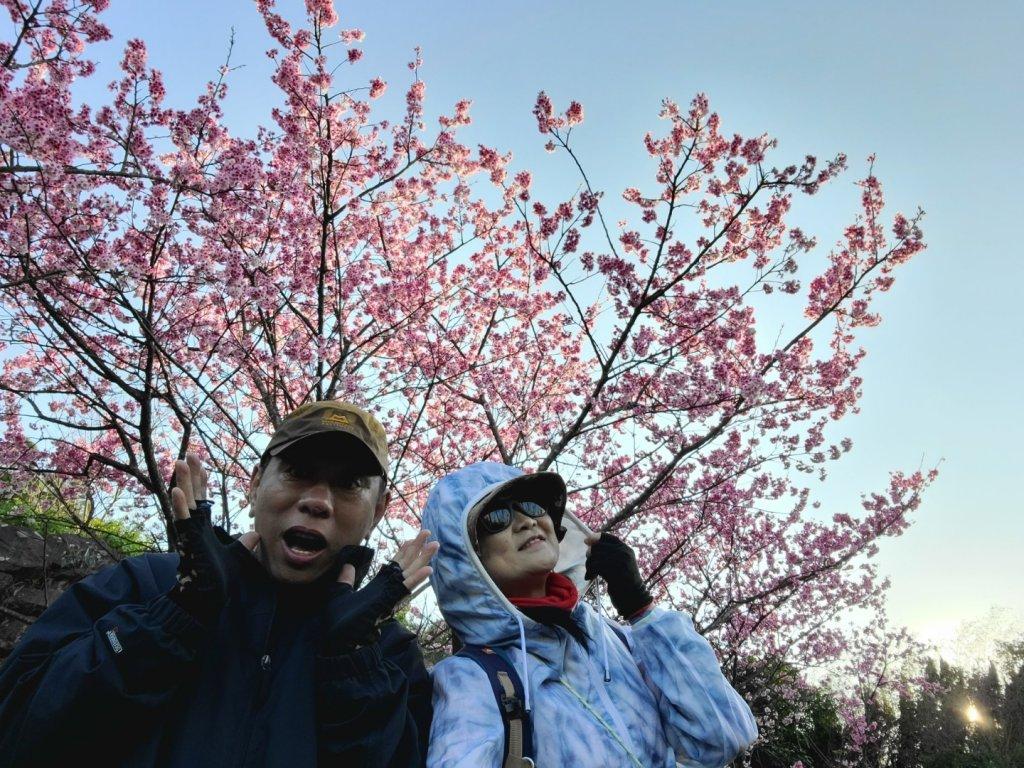 遇上櫻花季的直潭山_1252768