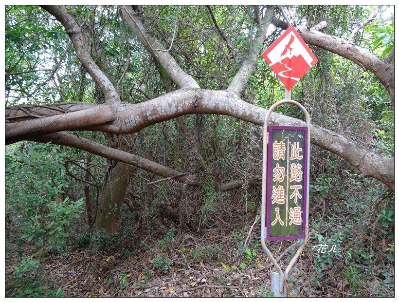 桃源里森林步道_904547