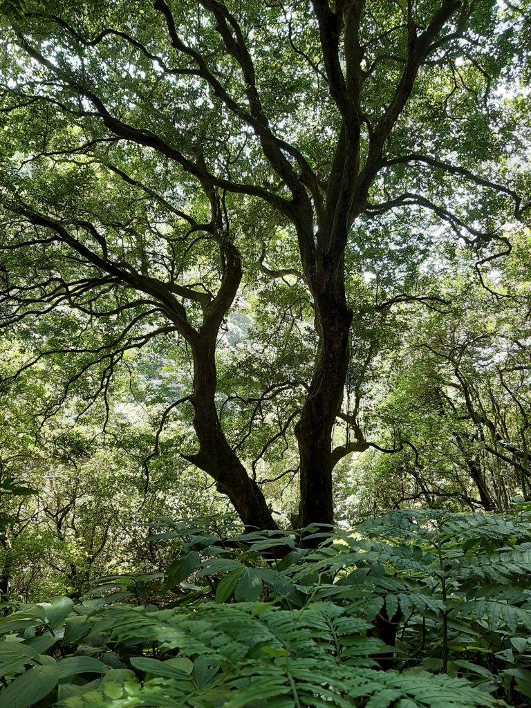 初秋走讀森林的風情與美感_1121514