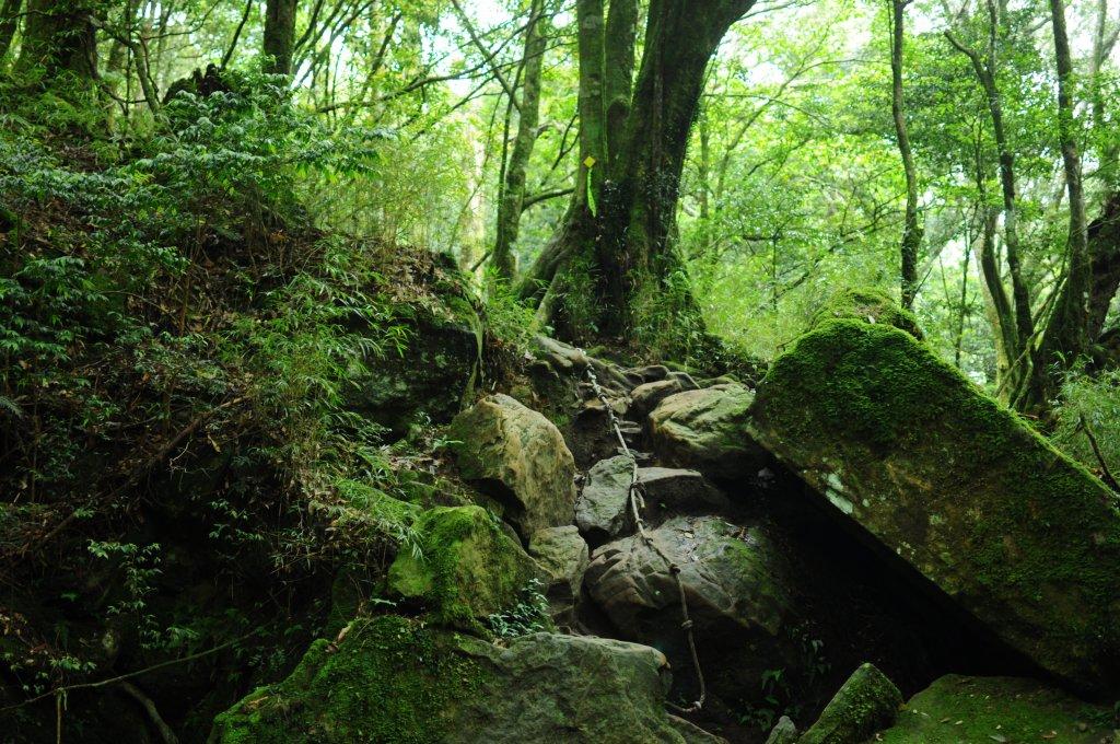 加里山二刷登頂遇見水晶蘭好興奮_584559