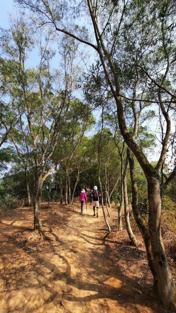 《彰化》田中森林步道O型20210228_1292481