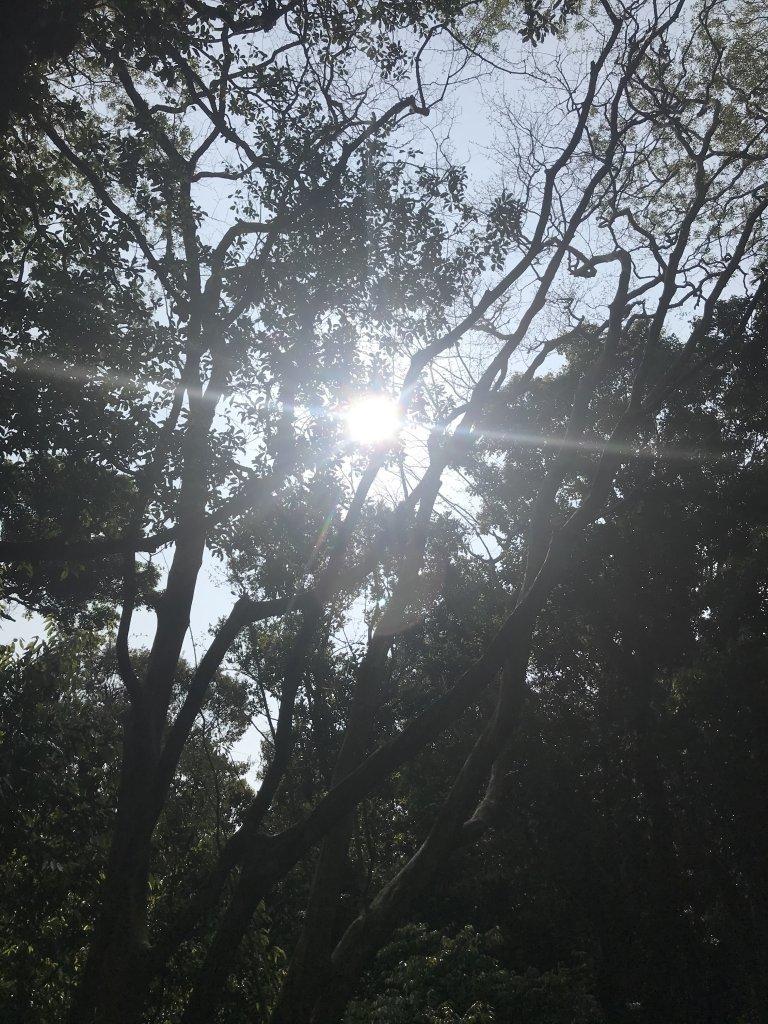 快來享受森林浴~東滿步道來回_1336624