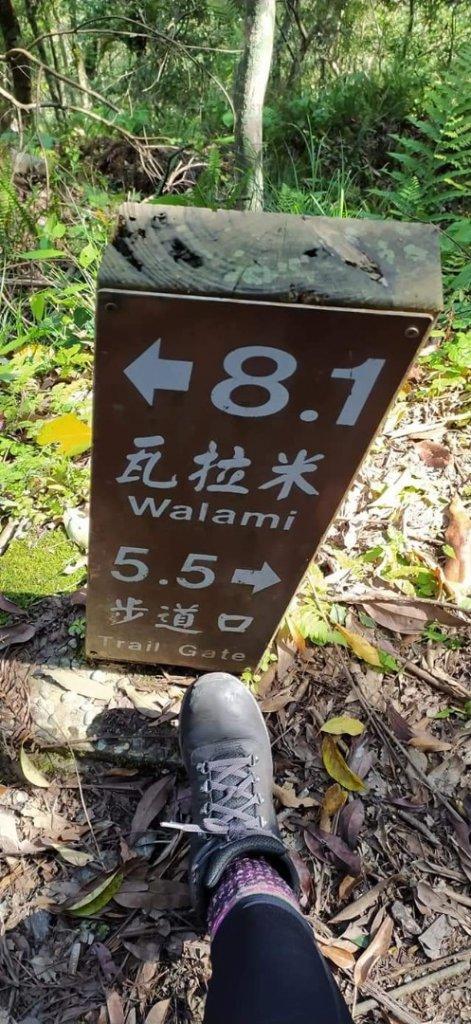 瓦拉米步道-邂逅血藤花 part I_1325855