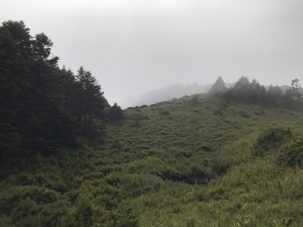 合歡山西峰|第五座百岳_1156323