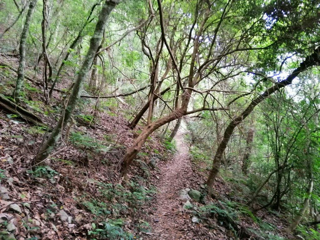 【台中。和平】清悠賞景。 德芙蘭生態步道_1099062