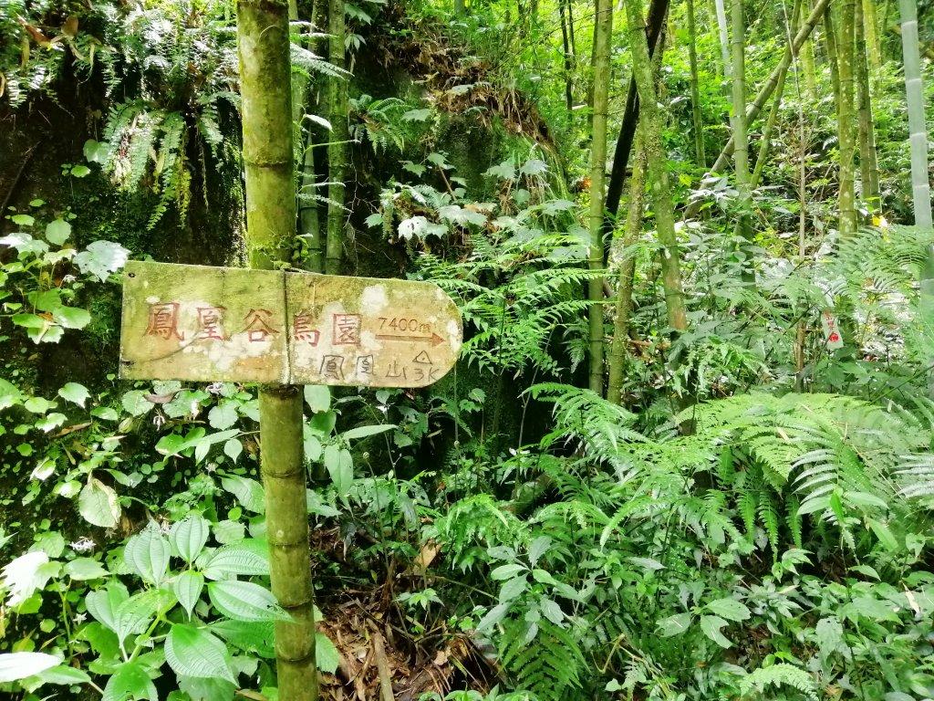 南投鹿谷~山野叢林不斷的陡上陡下~鳳凰山_1098088