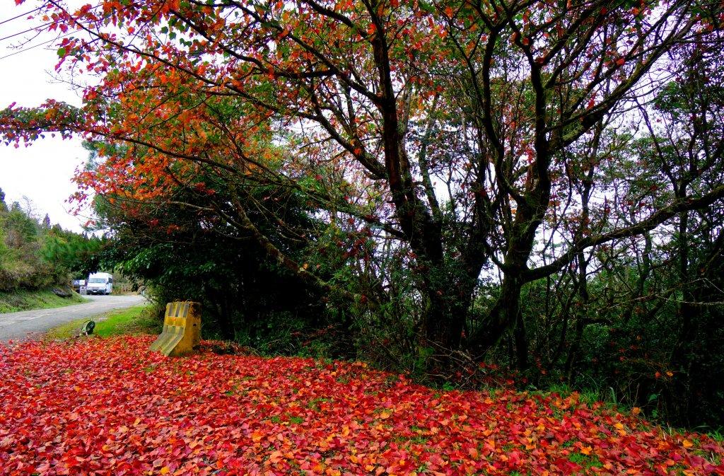檜山巨木森林步道_481628