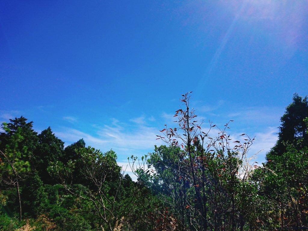 加羅湖--201902_531030