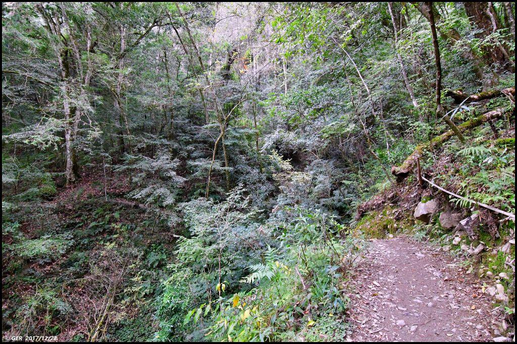 千年的對話~鎮西堡巨木森林 B區_234371