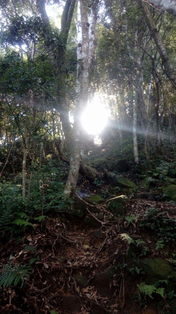 北得拉曼山登山步道神木區及內鳥嘴山連走_357910