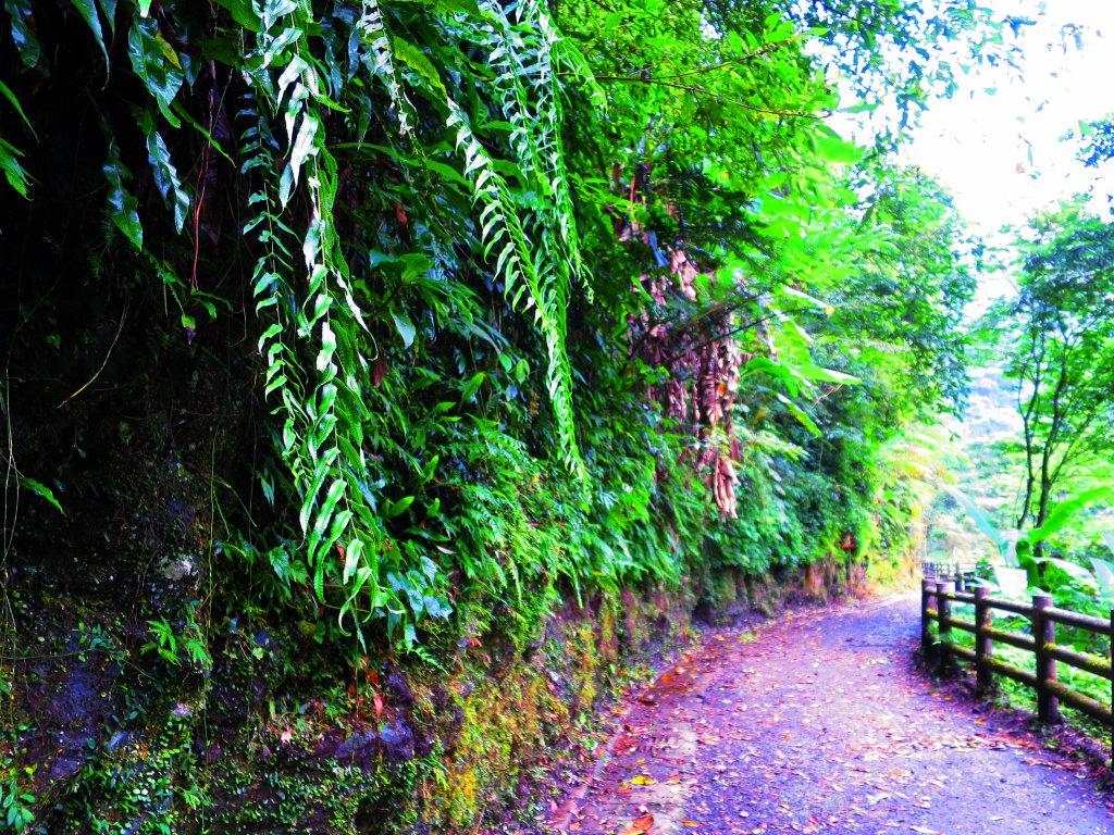 夏季清涼步道:烏來內洞、信賢森林步道_588239
