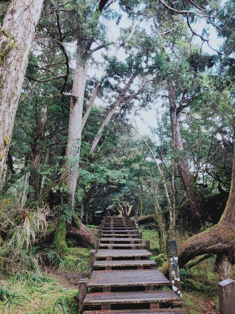 太平山檜木原始林步道_1293027