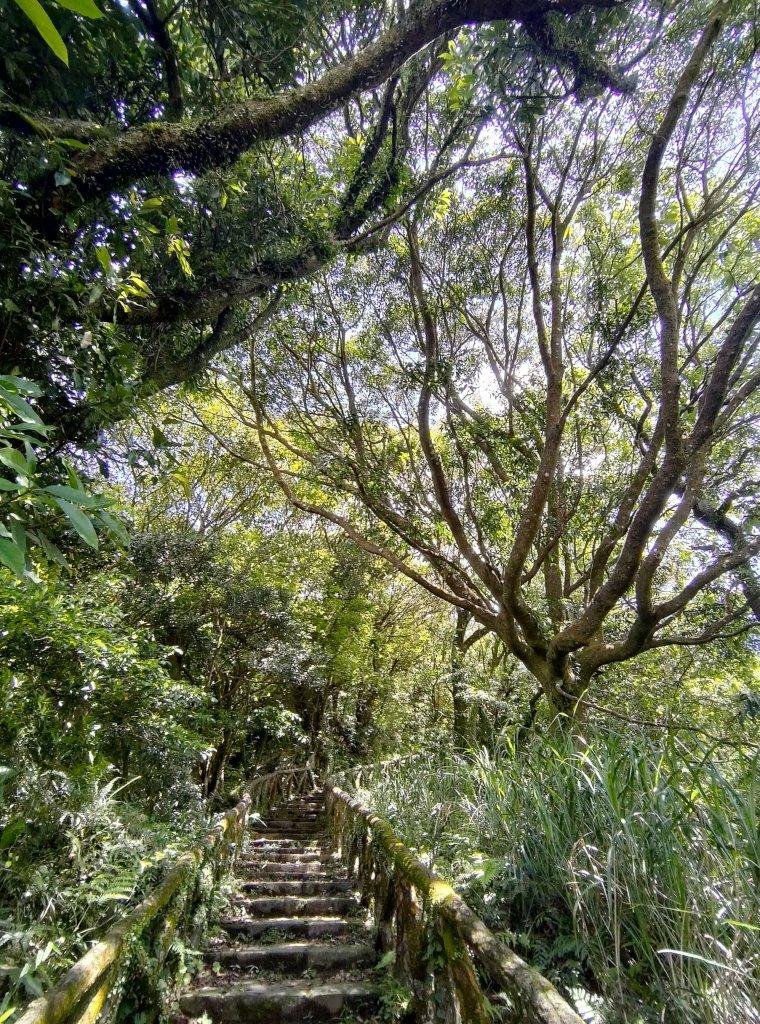 中正山步道-竹子湖來回_1361668
