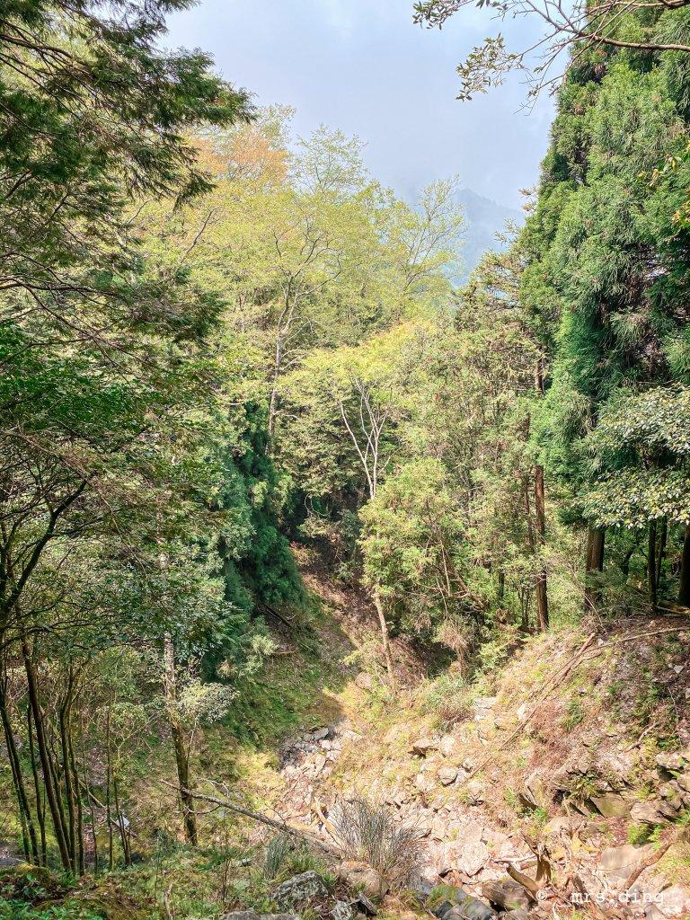 <新竹>觀霧檜山巨木群步道(雪霸國_924575