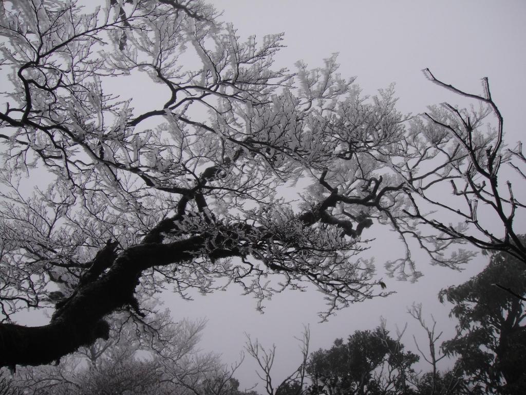 北插之美-霧淞、山毛櫸變色、雲海_47169