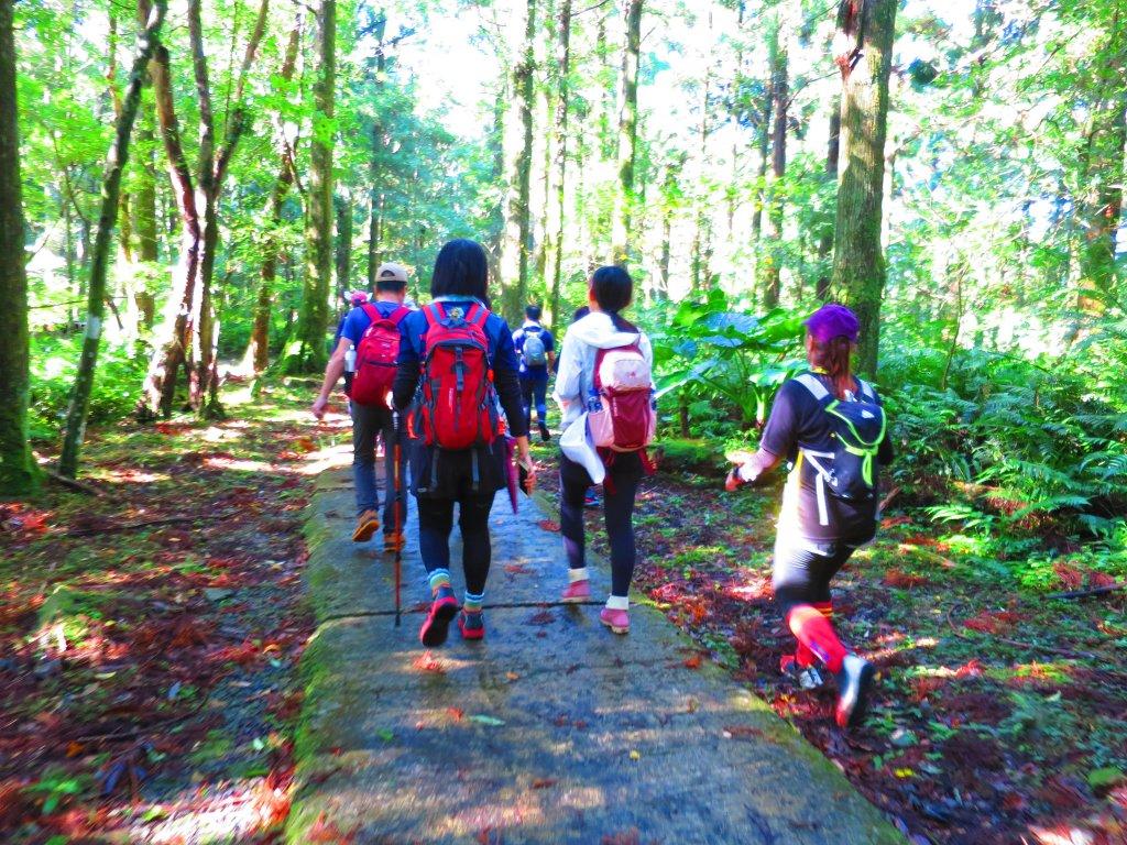 享受楓紅森林浴:東滿步道_747338