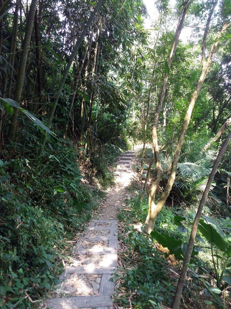 龍過脈森林步道_727923
