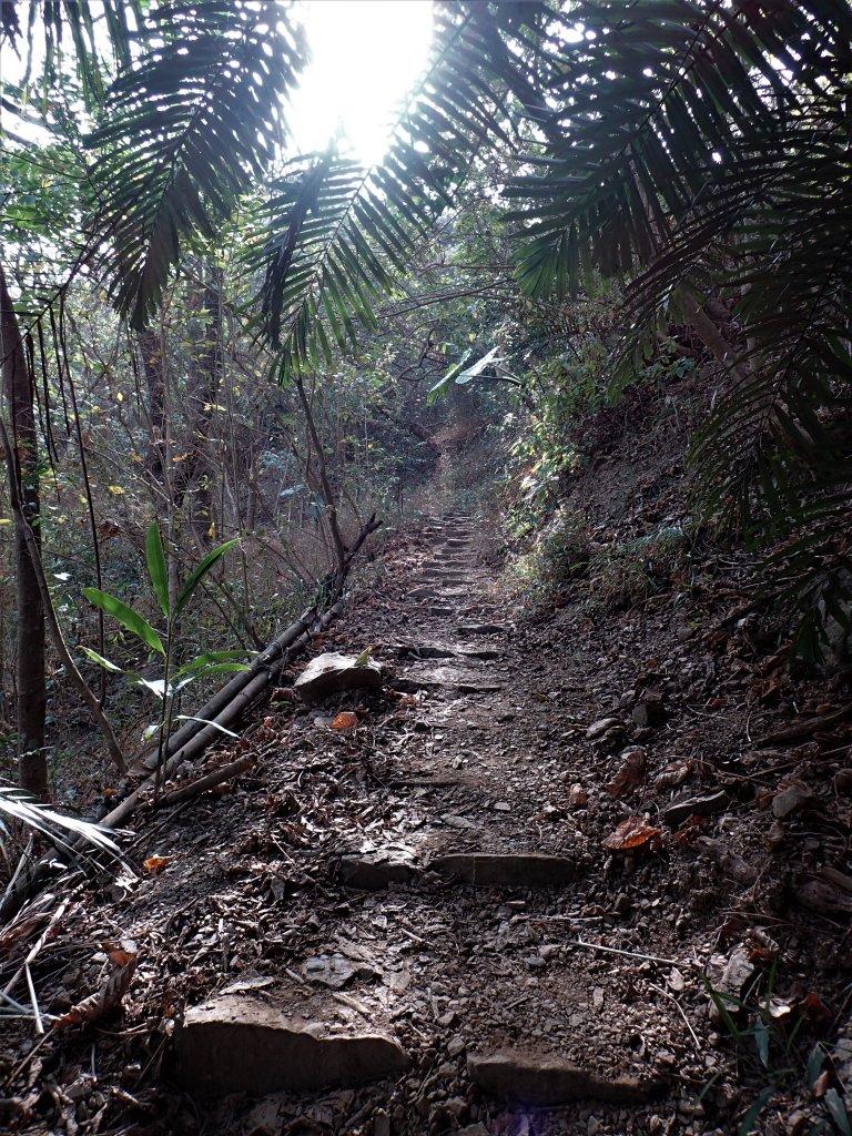 步道巡訪員│浸水營前段步道2月巡訪日誌_931663