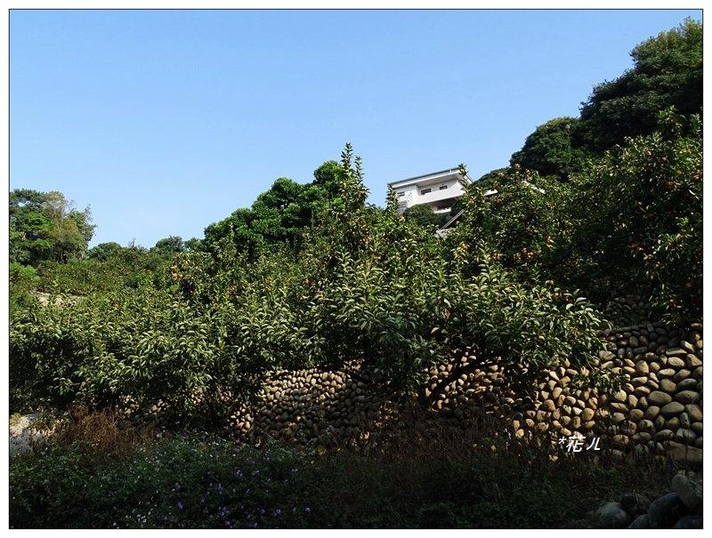 豐原/中90線三步道_689951