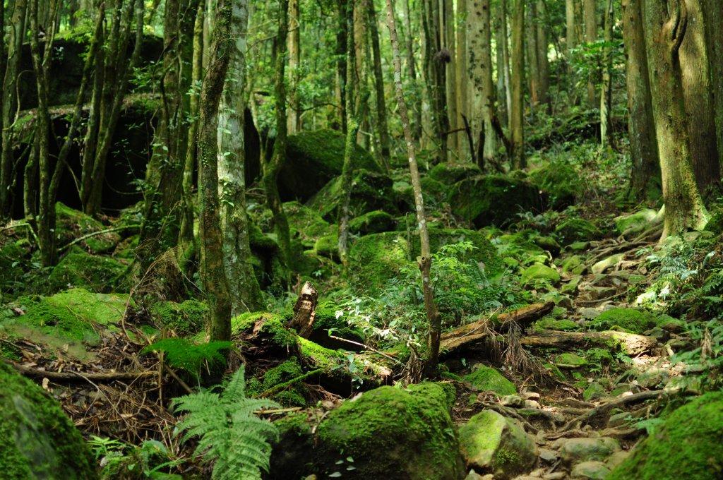 加里山二刷登頂遇見水晶蘭好興奮_584537