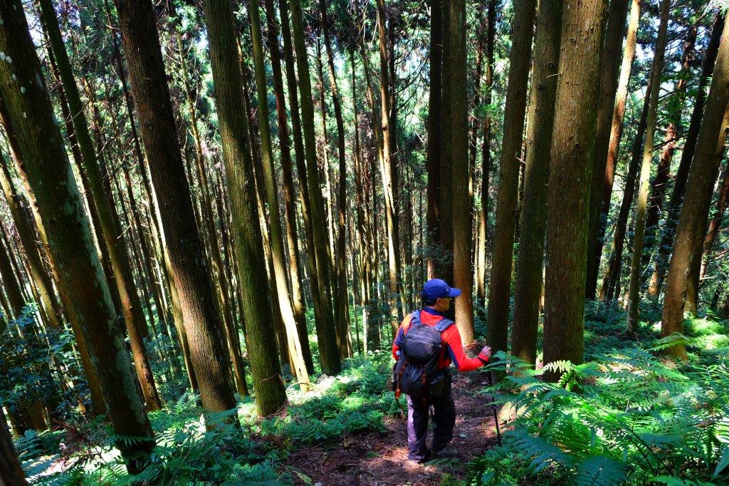 享受森林浴-油羅山_662258