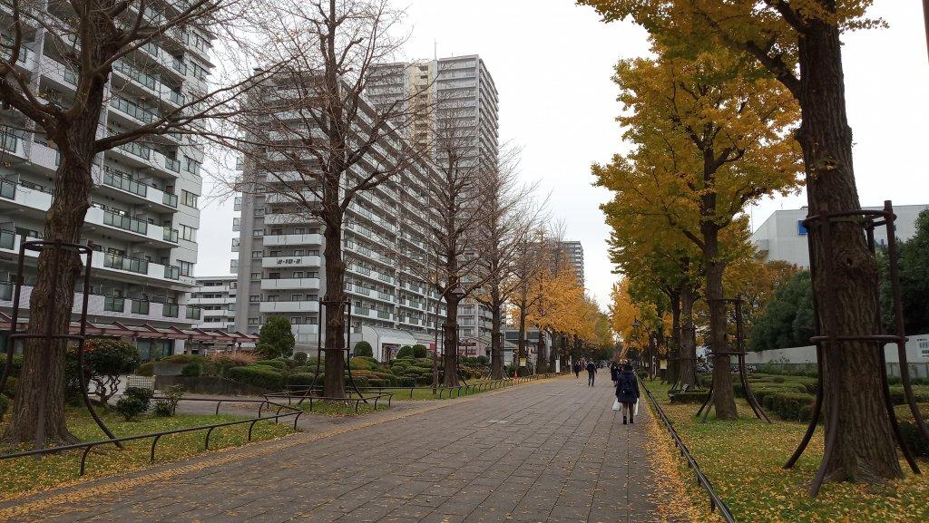 東京都練馬区光が丘公園_760600