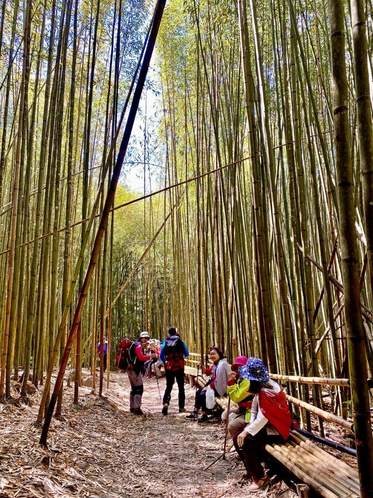 巨木饗宴~三刷雪白山    2021/4/24-25_1363506