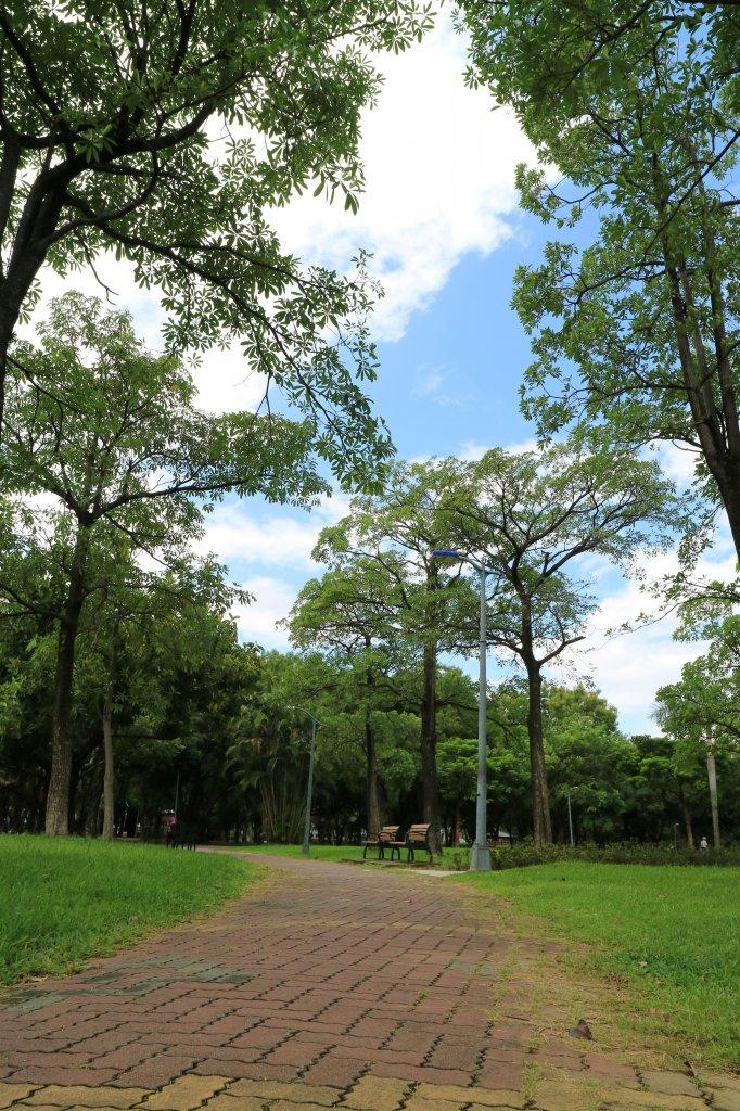 「都市之肺」大安森林公園_718008