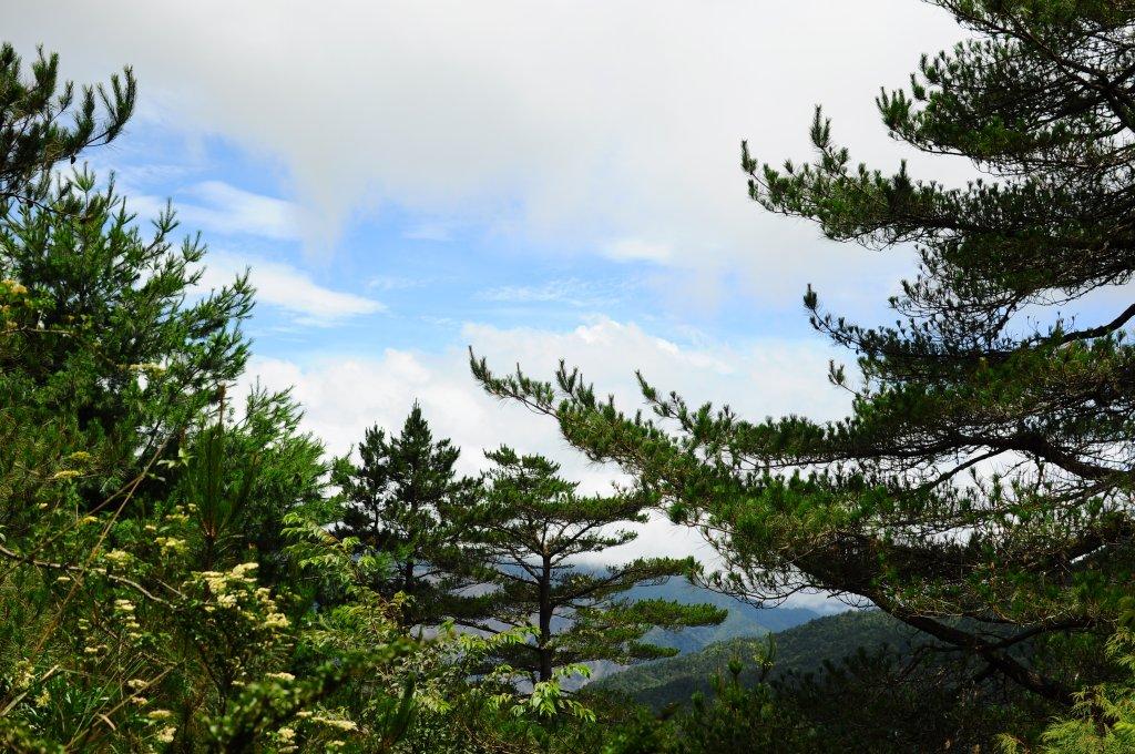 觀霧國家森林外拍_625860