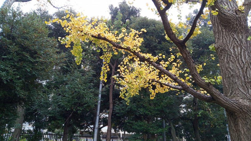 東京都練馬区光が丘公園_760595