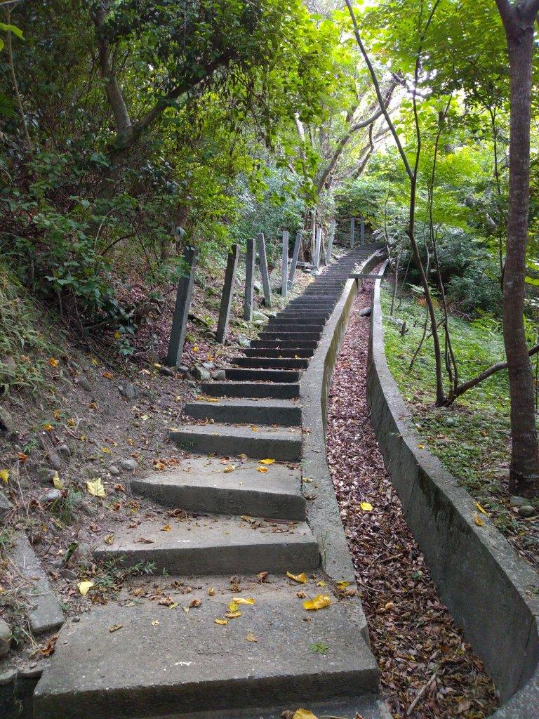 步道巡訪員 l 鯉魚山步道七月巡訪日誌_1050330