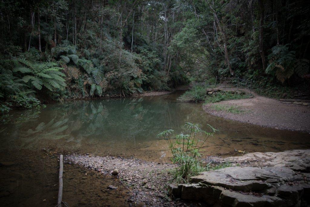 魚池鄉-澀水森林步道之水上瀑布_1171967