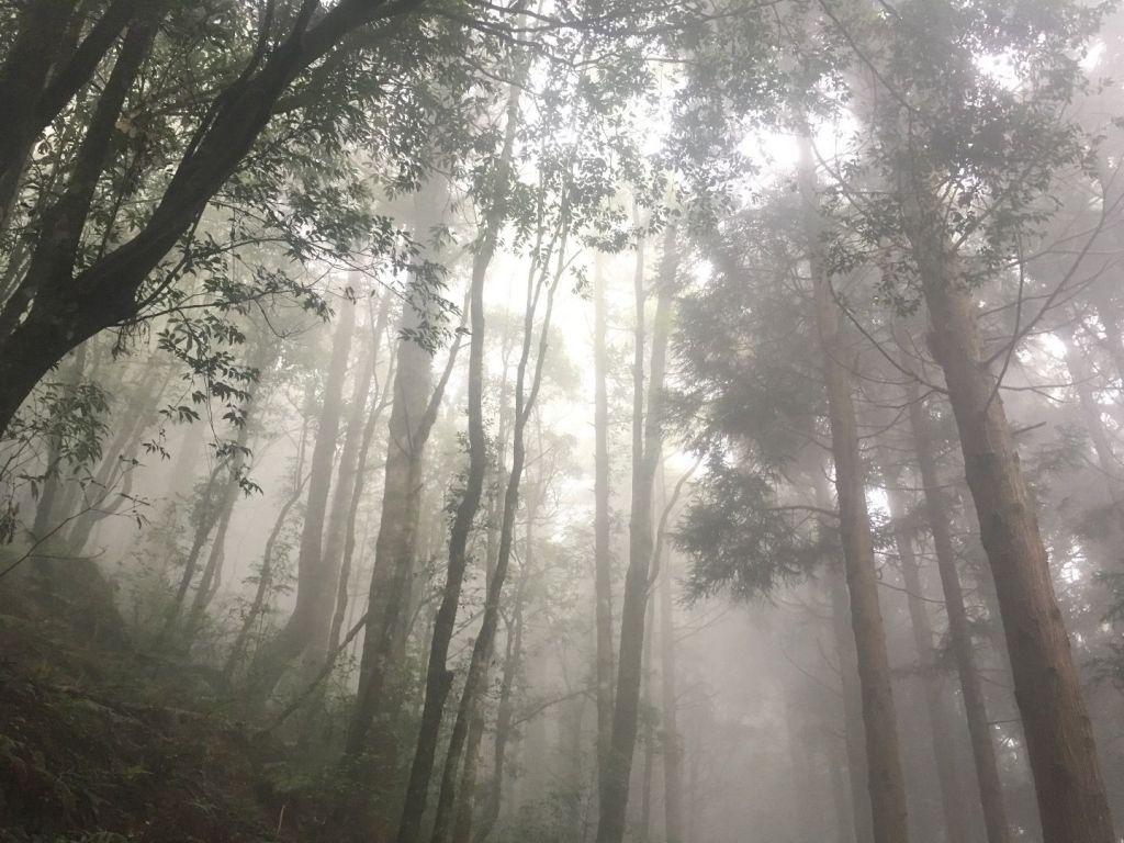 觀霧檜山巨木森林步道_171717