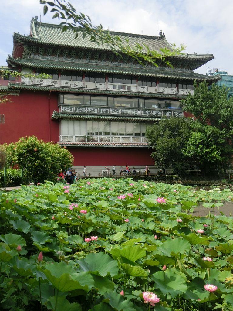 臺北植物園_356129