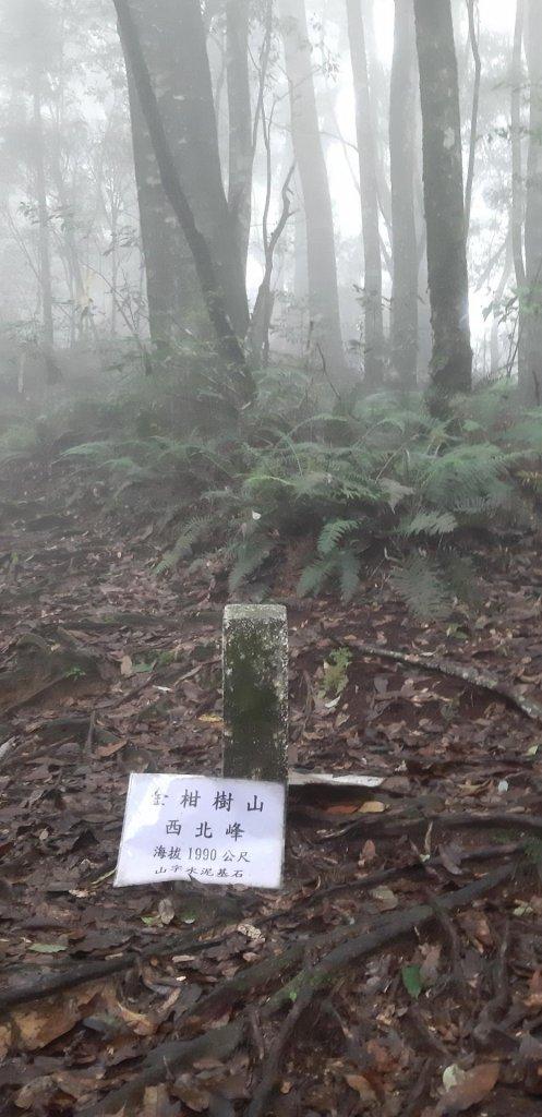溪頭南北嶺小縱走 順走金柑樹 忘憂森林_662927