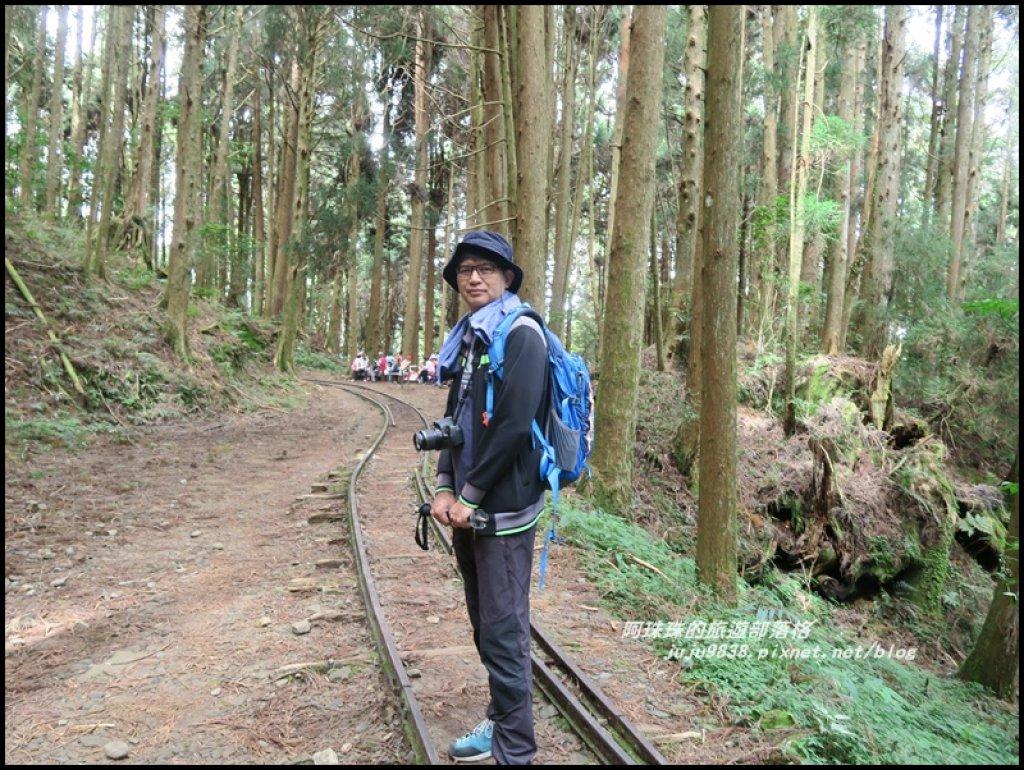 嘉義。特富野古道。鐵道森林最美的步道_422556