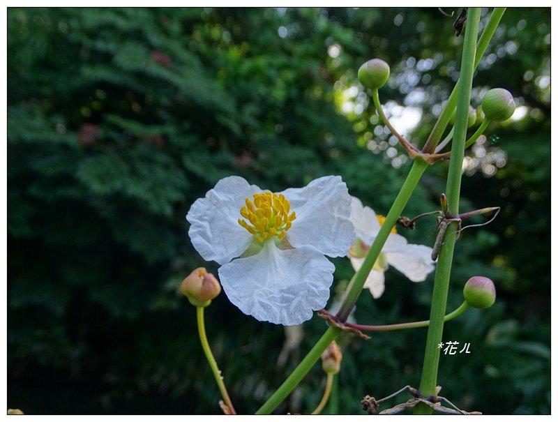 台北/植物園步道_686840