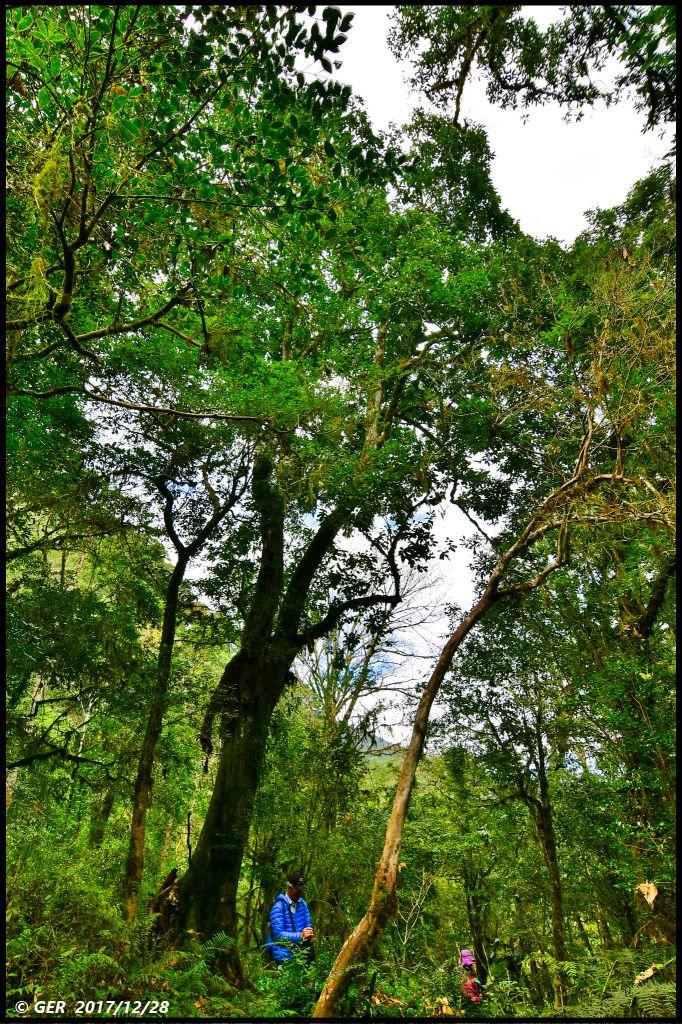 千年的對話~鎮西堡巨木森林 B區_234410