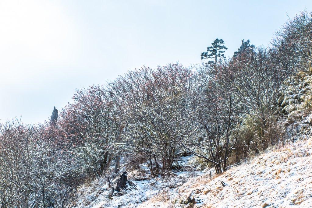 雪山冬之美_826779