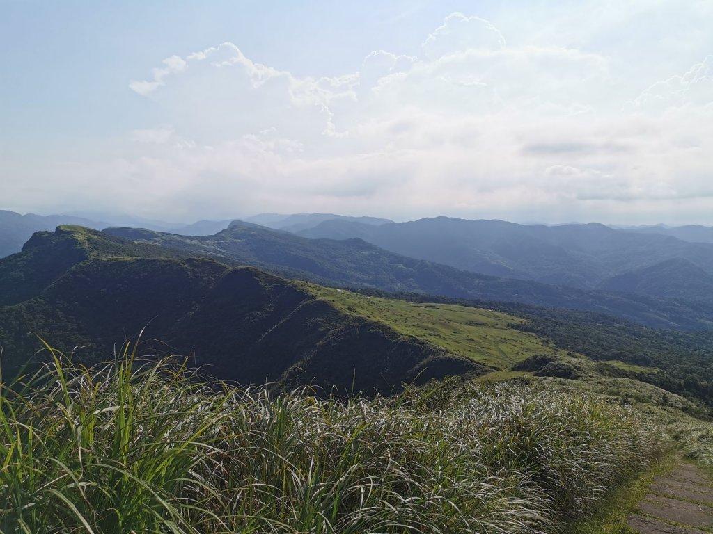 桃源谷步道(大溪、草嶺線)-滿谷牛與白鷺_1033952